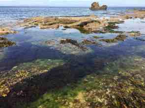 What wee beasties will we find in these rockpools at Hopeman