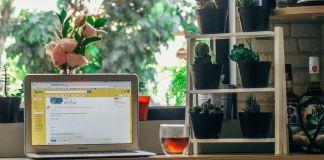 Grünzeug im Büro macht bessere Luft