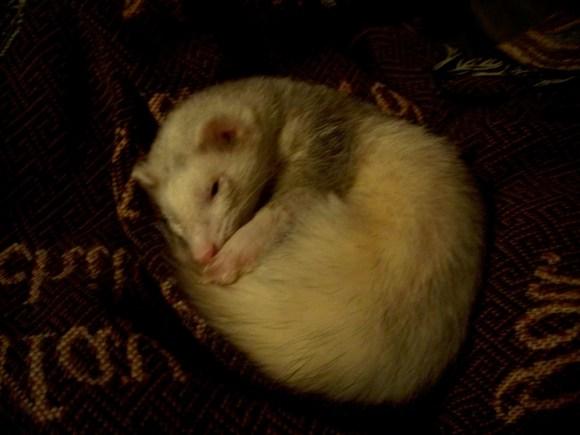 Riot.napping