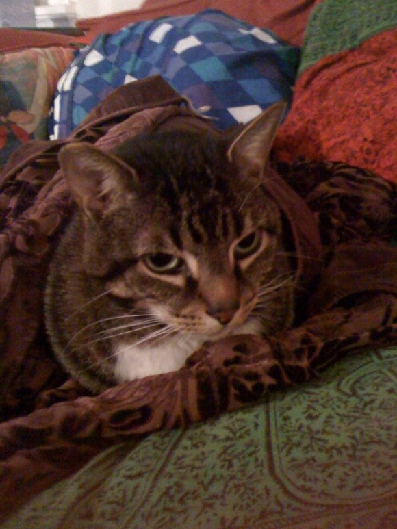 Oscar's new blanket