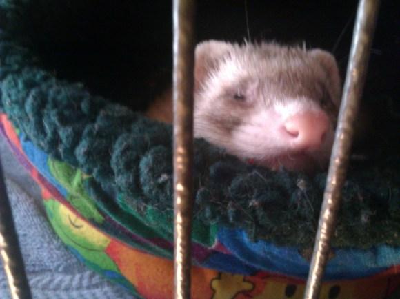 Sleepyclaire