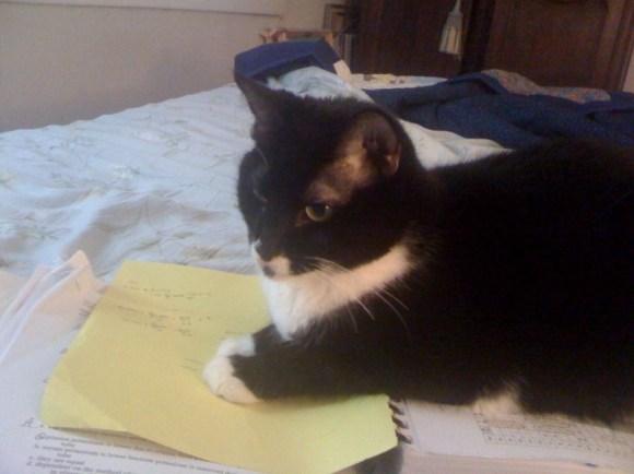 Della studies