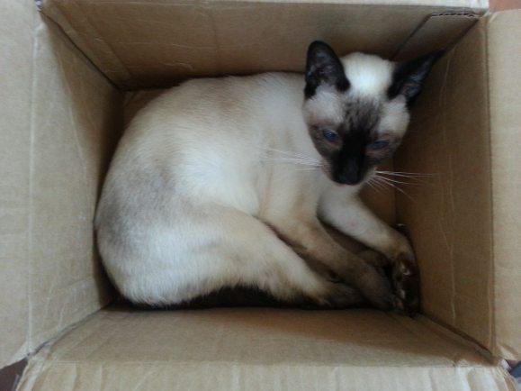Kismet box