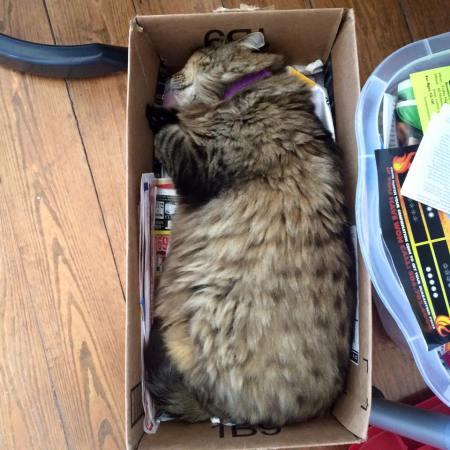 Boris in the Box