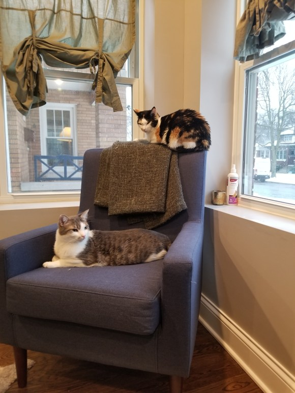 two cats chair