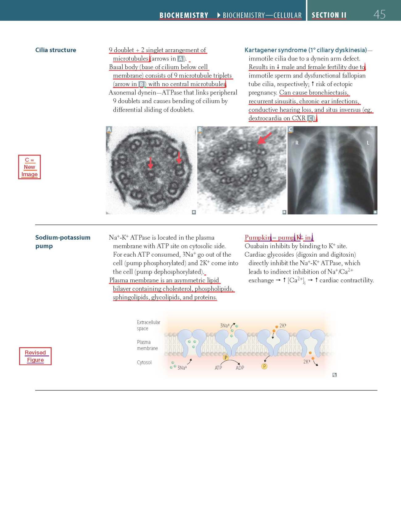 first-aid-step-1-2017-sample-revisions_page_1