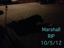 And sweet, precious Marshall - we miss you.