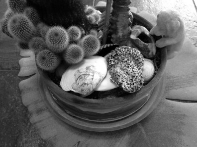Prickly cactus and rough shells on my kitchen table