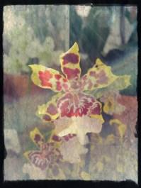 delicate flowers 1
