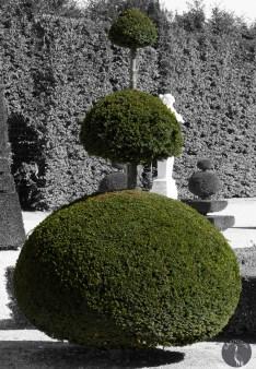 smooth tree 0278p
