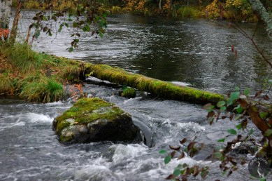 river_2817