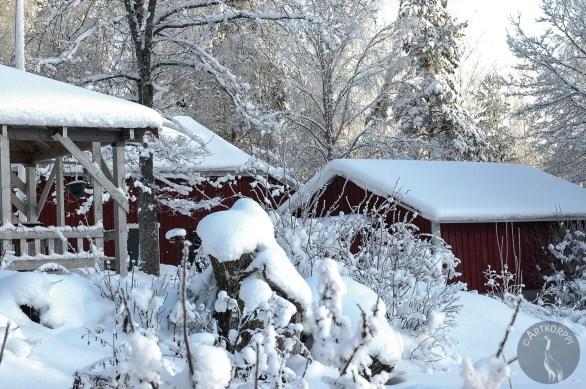 winter_snow2603