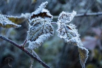 frozen_blewish_0102p