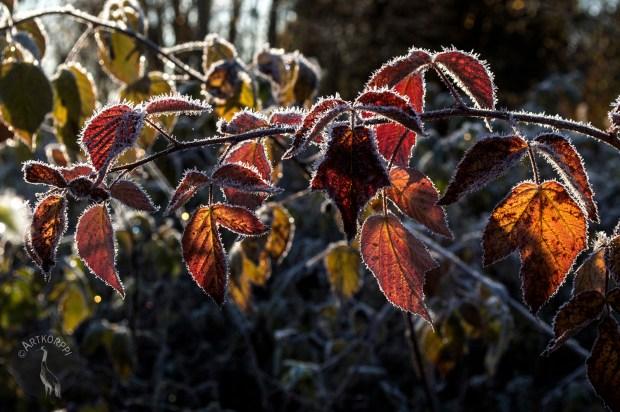 rasberry_leaves_0100p