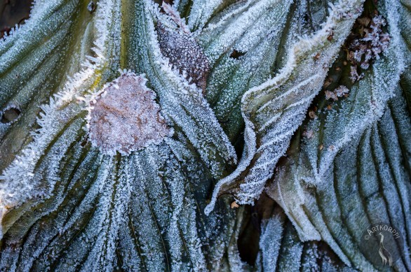 Frost2_0022