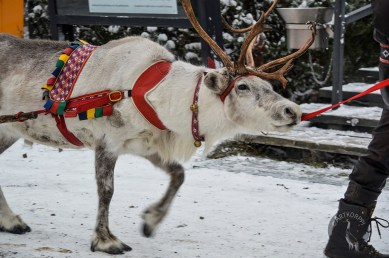 sleigh_ride_0115p