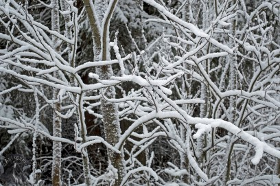 snow_branches_0045p