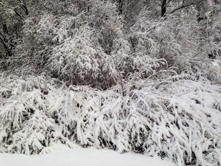 snowy_sunday_5557p