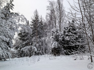 snowy_sunday_5567p