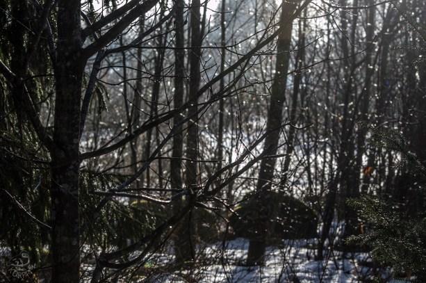 trees_woods_0023p