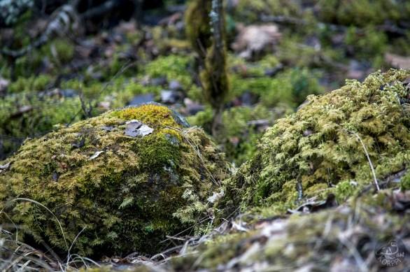 mossy_stones_0101p