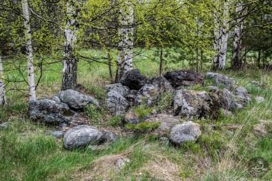 birches_stones_0034p