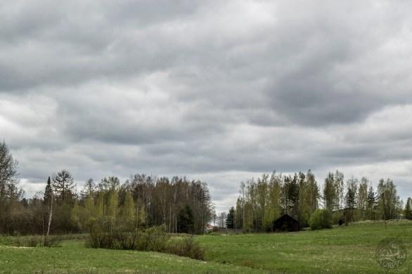 fields_trees_0051p