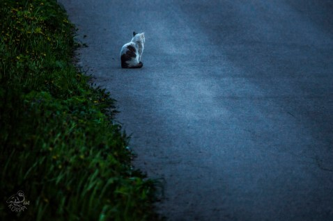 cat_on_the_way_0084p