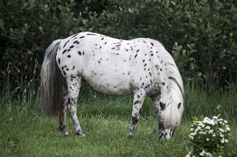 circus_horse_0015p