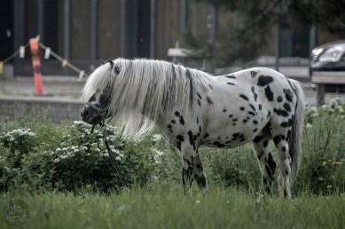 circus_horse_0040p