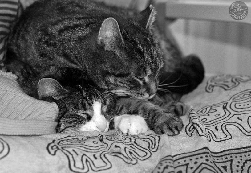 cat_paws_0592p