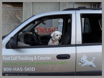 dingo in first call trucking car