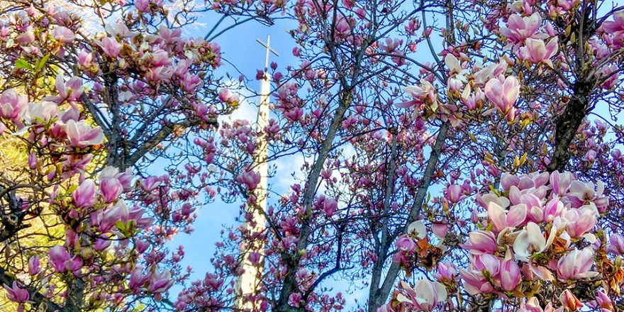 FCCSJ Sanctuary with tulip tree