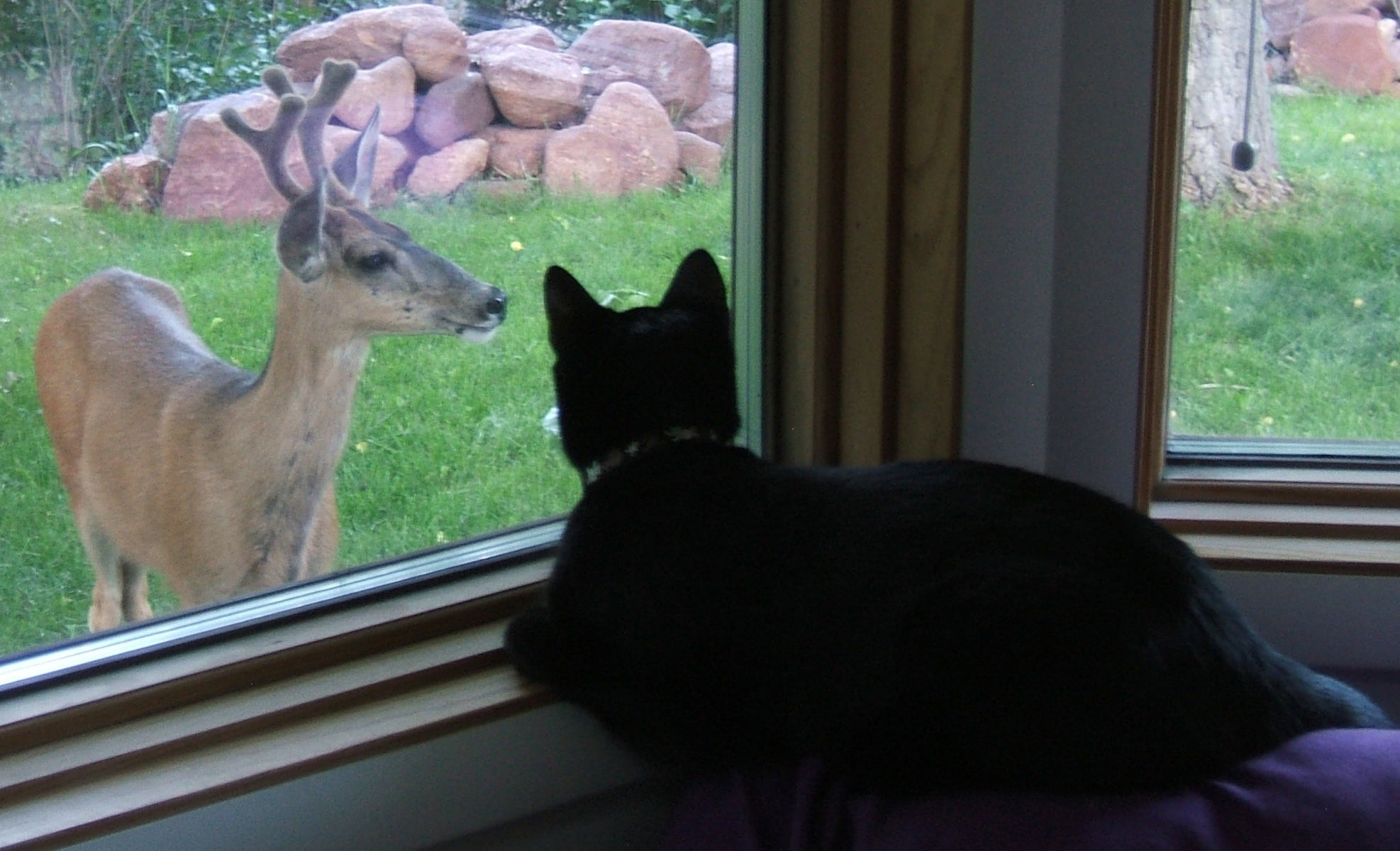Image result for cat looking out window at a deer