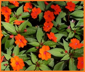 Commercial Landscaping Service in Broward