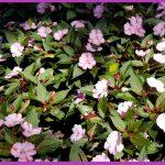 Purple Landscaping Flower