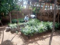 Nigerian United Methodists Plant 20,000 Trees