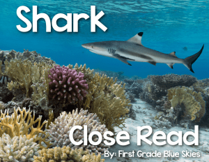 Shark Close Read and… a Giveaway, too!