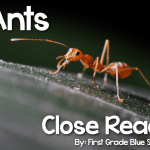 Ants Close Read {Giveaway}