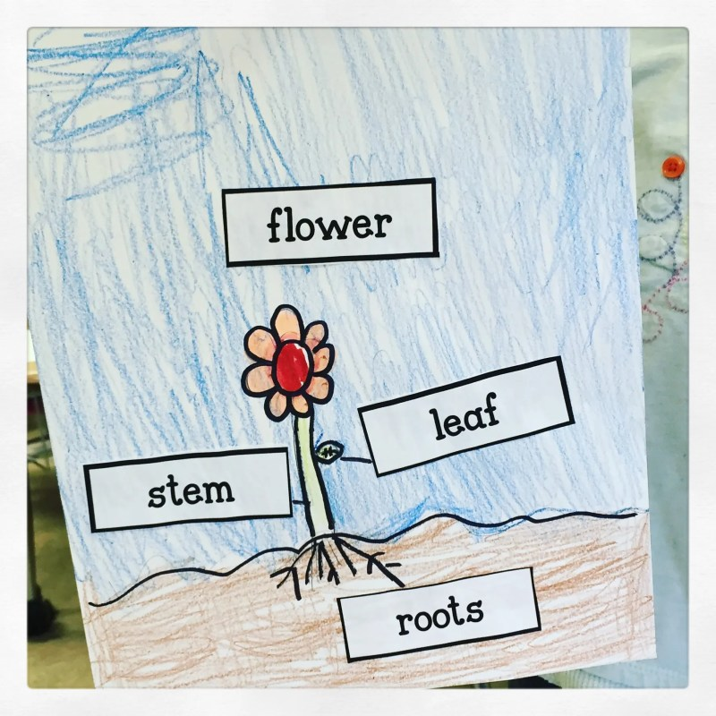 parts of a plant free labels kindergarten