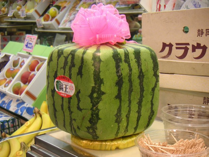 This is the world's first square watermelon