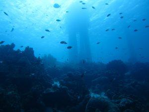 Bonaire under water.