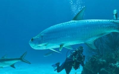 From Yahoo Travel: Aruba-Bonaire-Curacao Smackdown