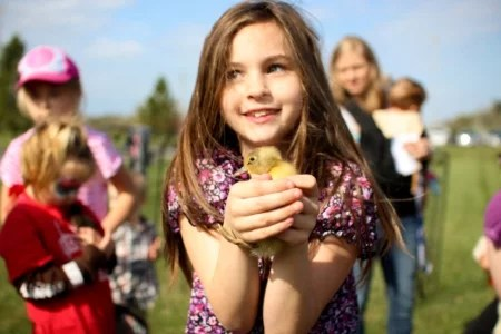 girl-with-baby-chicken