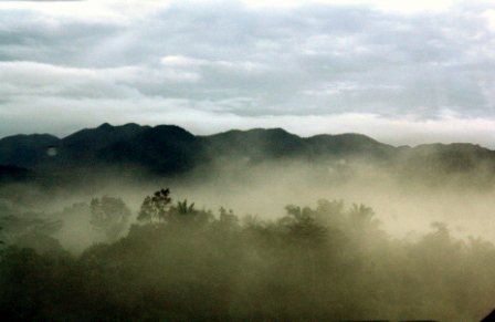 The morning mist form a cloud-like image that covers the trees and hills.