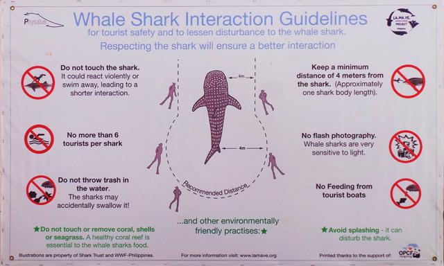 Oslob whale shark rules