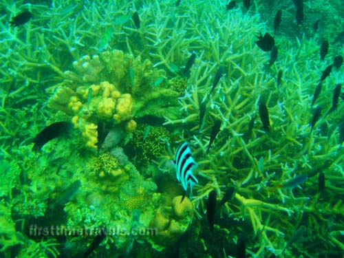 Snorkeling in the Philippines