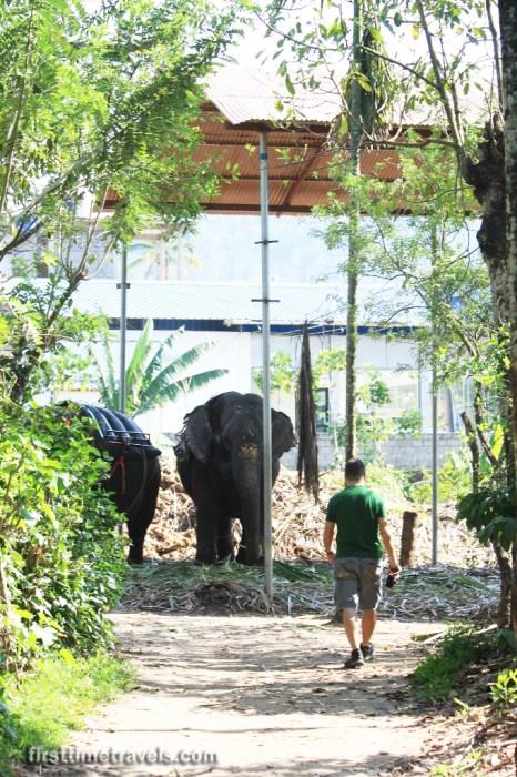 Elephants in Kumily