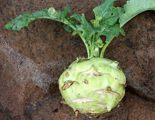 Green Kohlrabi- Wikimedia Commons