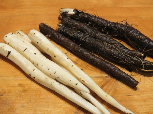 Another tasty, although not so pretty vegetable that grows well in the Yukon is the root called salsify.